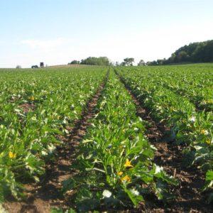 Zenvus leadership travels to Morocco, to visit Africa's largest fertilizer producer