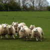 The Perils of Herding Business Vision